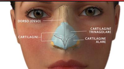 Rinoplastica tfh for Interno del naso